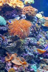 Fototapeta na wymiar Colourful coral reef