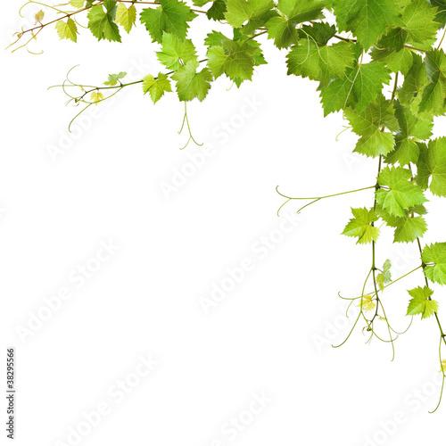kolaz-z-lisci-winorosli