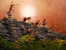 Defence Of Great Wall, Ants Gu...