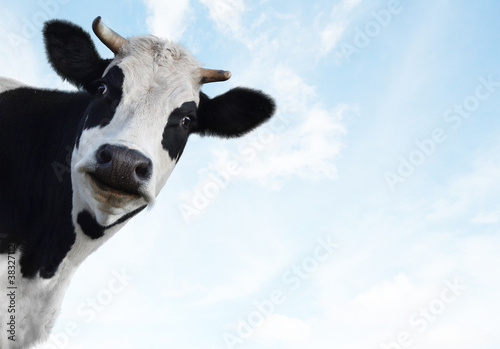 Photo Stands Cow cow 2 (2)(10).jpg