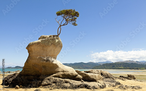 Tree on the rock Tablou Canvas