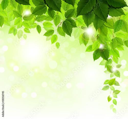 lato-galaz-z-swiezymi-zielonymi-liscmi