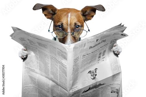 pies-czyta-gazete