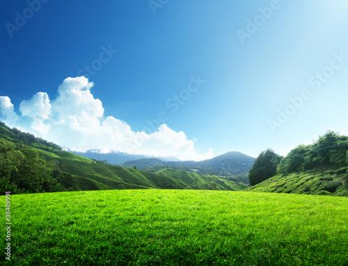 Valokuvatapetti field of spring grass and mountain
