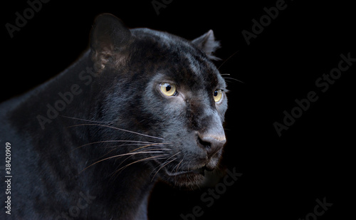 Photo  Black Panther