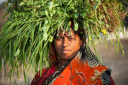 Slika na platnu Indian villager woman carrying green grass