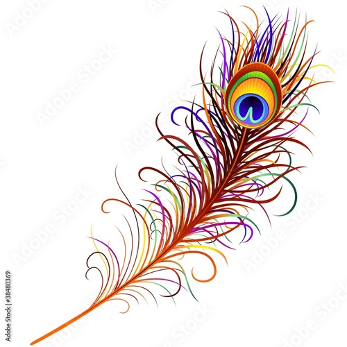 Piuma di Pavone-Peacock Feather-Vector