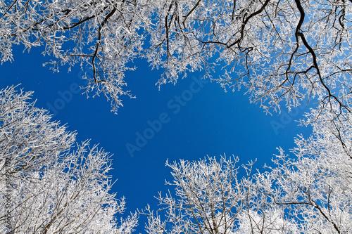 Fototapety na sufit   krajobraz-z-szronem-mroz-i-snieg