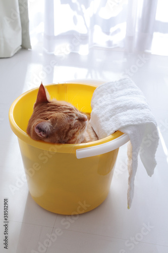 Fotografie, Obraz  Ginger cat sitting in yellow bucket