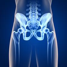 Hüfte-Anatomie - 3D Grafik