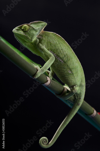 Green chameleon on bamboo #38526513