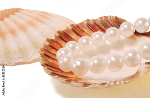 Fotografija  sea shell with pearls