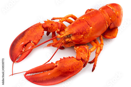 Papiers peints Coquillage Lobster