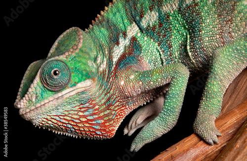 Staande foto Kameleon Chameleon close-up