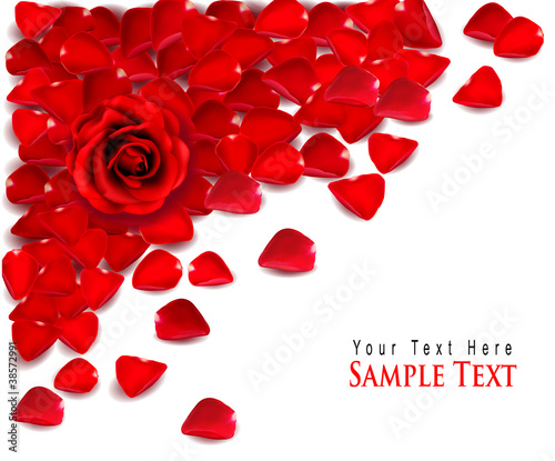 Photo  Background of red rose petals and rose. Vector