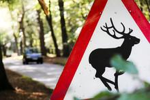 Deer Warning Road Sign Countryside