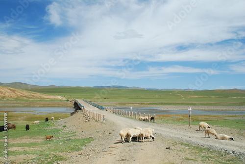 Foto op Plexiglas Afrika Mongolie