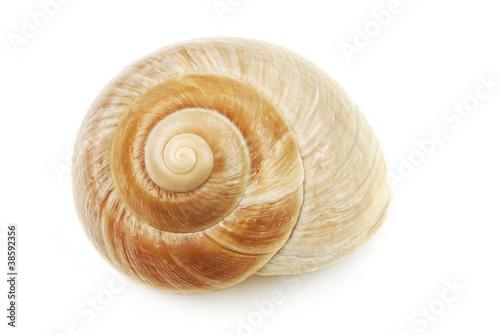 Muschelschale spiralfšrmig