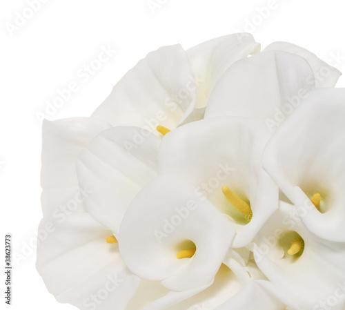 Poster Orchid Bunch of Cala Lilies in high key