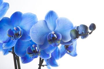 Fototapeta orchidea kwiat