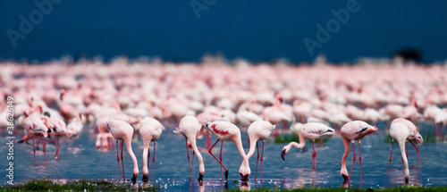 Foto op Aluminium Flamingo Flamingos at Lake Nakuru, Kenya