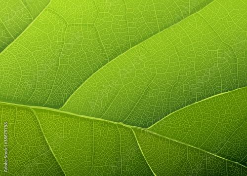tekstura-zielony-lisc-wektorowy-tlo-eps10