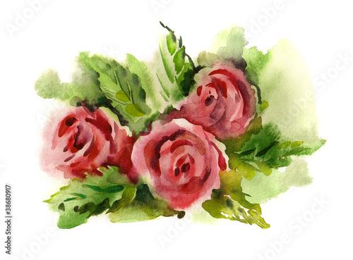 akwarela-rose-