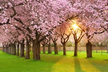 Faszinierende Frühlingsszene bei Abendsonne