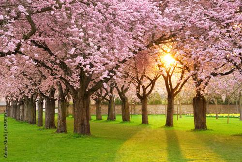 Faszinierende Frühlingsszene bei Abendsonne Fototapeta