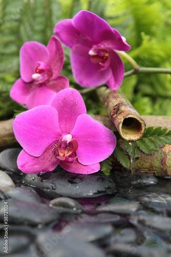 la source des fleurs - 38721024