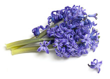Bunch Of Hyacinth