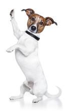 Dog High Five