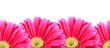 Leinwandbild Motiv Power Flower Background
