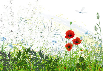 Fototapeta Maki Landscape with wild grass and flowers and flying dragonfly