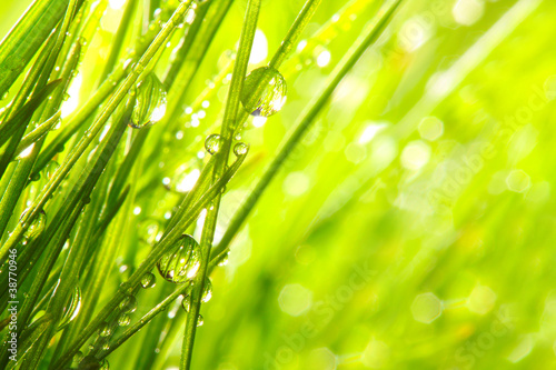 Fresh morning dew on a spring grass.