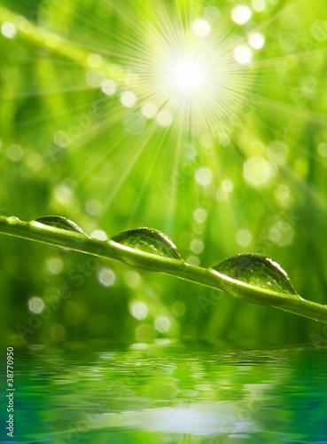 swieza-ranek-rosa-na-wiosny-trawie
