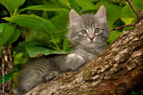 Gattino sull'albero #38772541