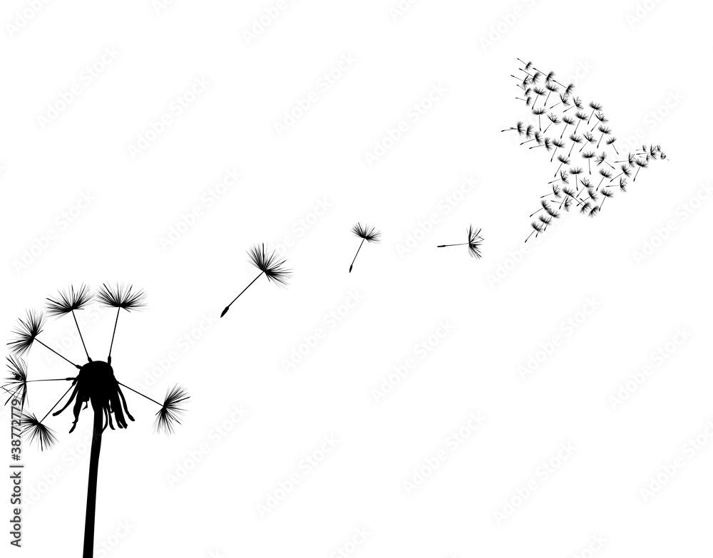 Fototapety, obrazy: dove and dandelion