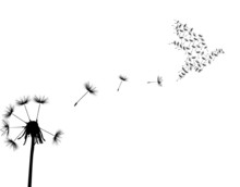 Dove And Dandelion
