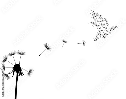 dove and dandelion