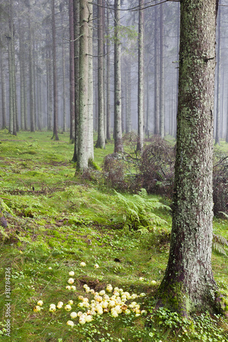 Foto auf Gartenposter Wald im Nebel Laid out apples in the woods