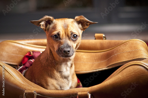 Montage in der Fensternische Hund Dog Bag