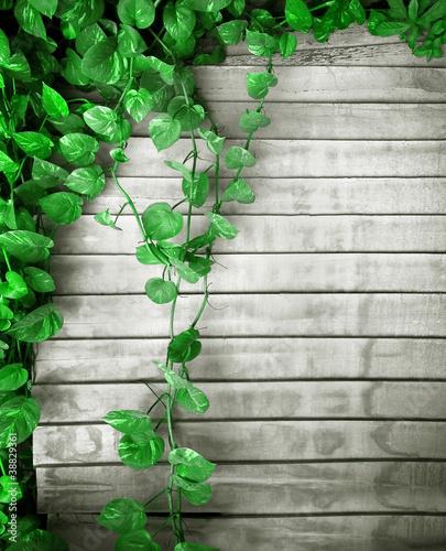 Fotografija  evergreen spread background
