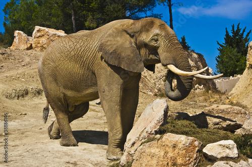 Poster Parrot Elefante