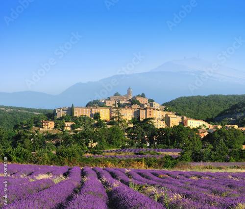 Garden Poster Lavender banon