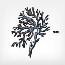 Engraving Vintage Coral.