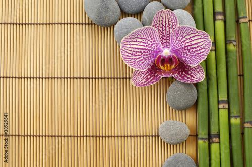 Fototapeta bambus   rozowa-orchidea-i-kamienie-z-cienkimi-bambusowymi-pedami