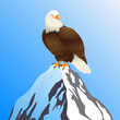 Mountain Top and Bald Eagle