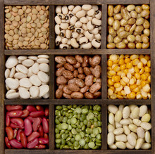 Bean Background Nine Varieties...