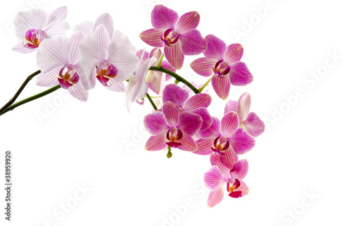 Recess Fitting Orchid Orchideenrispen